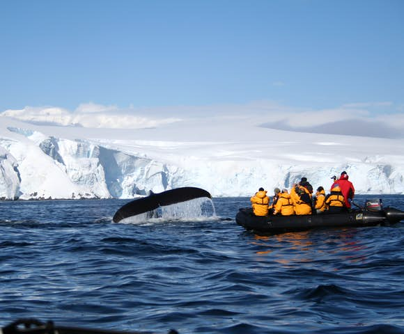 Looking at diving humpback whales from the Zodiac, Melchior Islands, Antarctica
