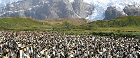 Antarctica Cruises 2021