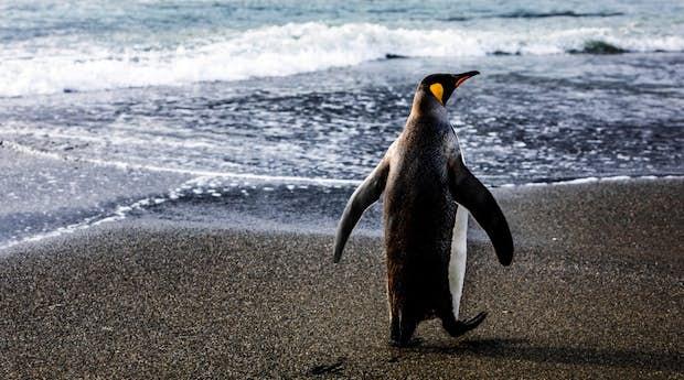 AUR_4_Susan-Portnoy_RTD_King-Penguins.2