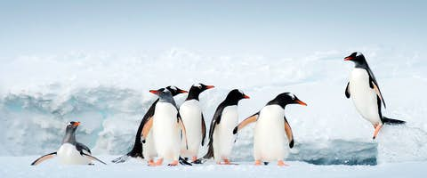 Cruise to The Antarctic Peninsula