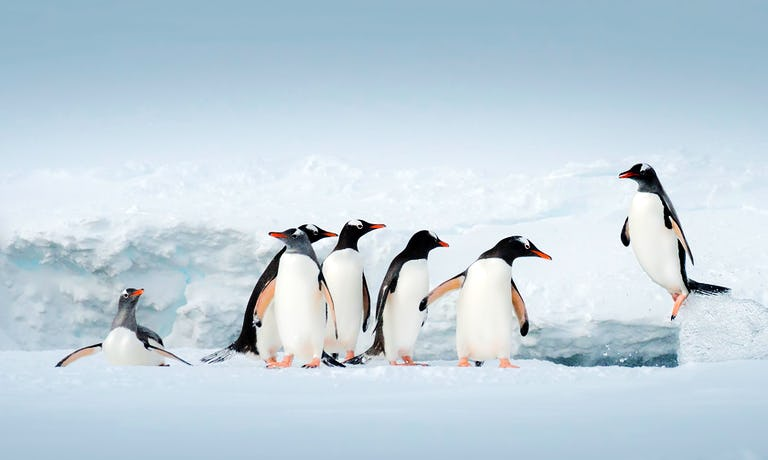 Antarctic Peninsula Revealed
