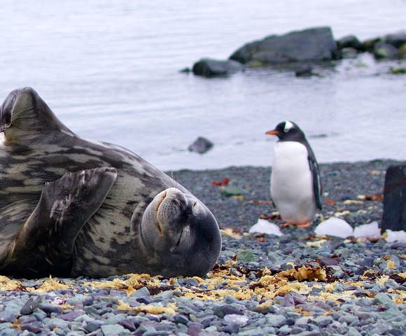 The wildlife sightings on Antarctica cruises are unrivalled