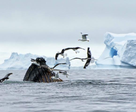 Antarctic Circle Cruises