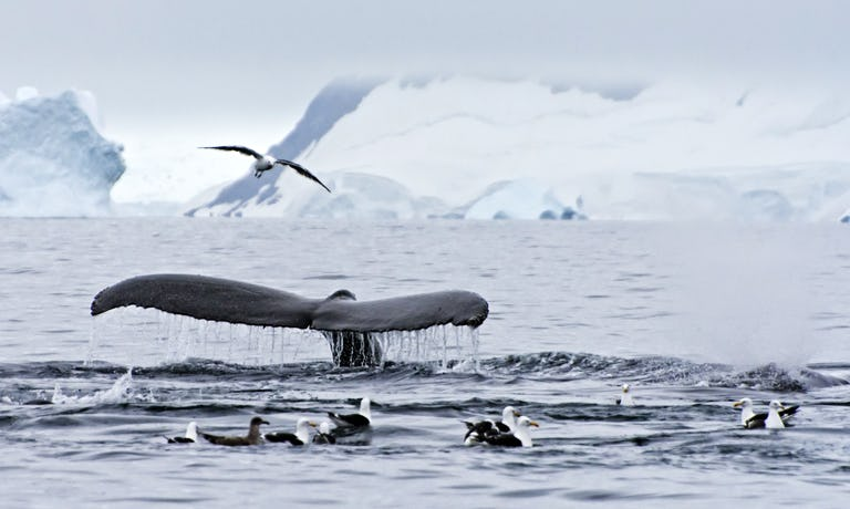 South of the Antarctic Circle