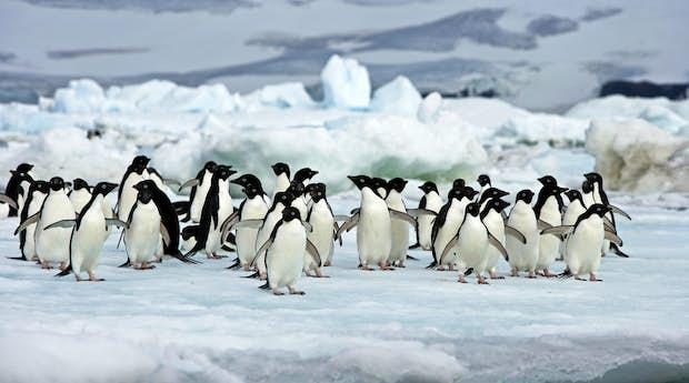 Antarctic Peninsula Expedition