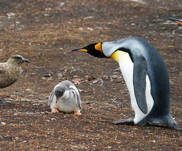 Visit the Falkland Islands