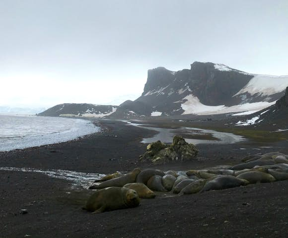 Elephant Seals at Hannah Point, South Shetlands, Antarctica