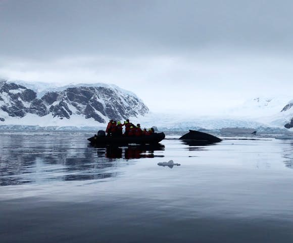 Watching humpback whales from the Zodiac, Wilhelmina Bay, Antarctica