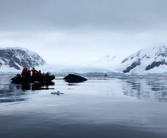 Watching humpback whales from the Zodiac, Wilhelmina Bay, Antarctica