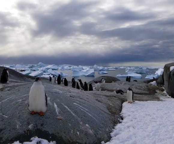 Gentoo penguins on Pleneau Island in Antarctica