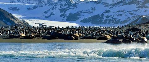 Explore Antarctica, South Georgia and Falklands