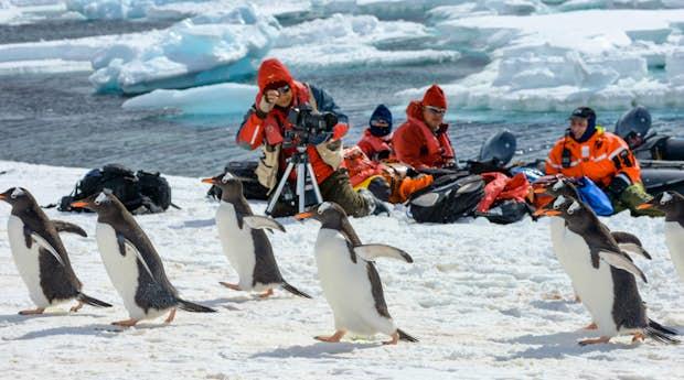 South Georgia, Antarctica and Falklands Luxury Explorer