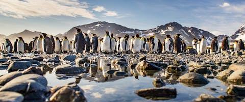 Antarctic Peninsula Cruises