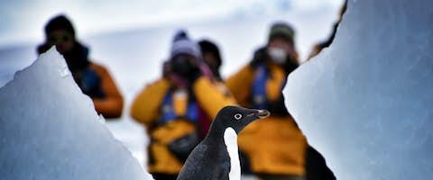 Antarctic Peninsula Revealed