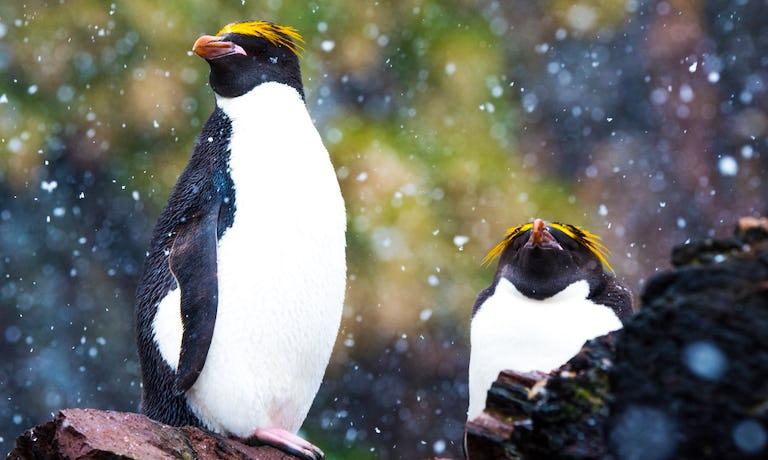 Encounter South Georgia & The Falklands