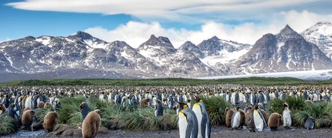 Explore Antarctica, South Georgia and Falklands
