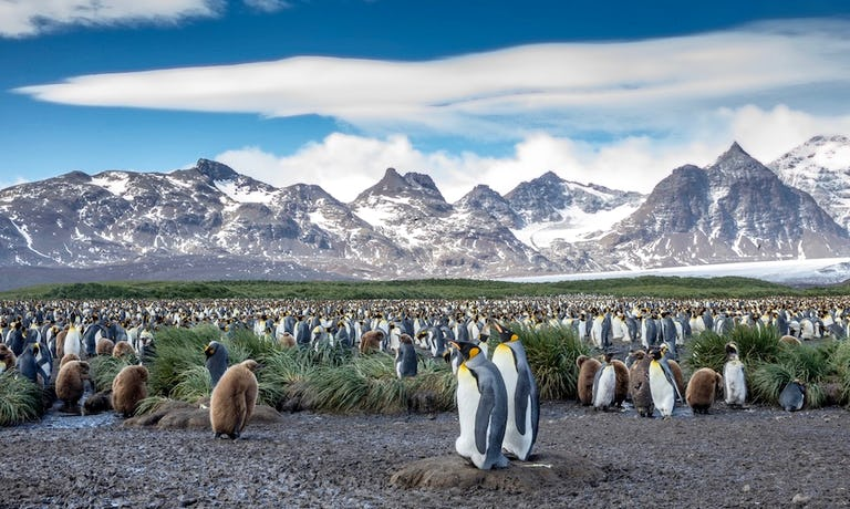 Antarctica, South Georgia & Falklands In Style
