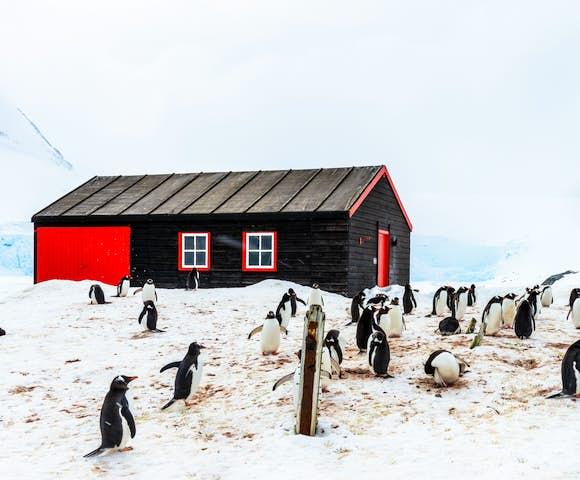 Many Antarctica cruises visit Port Lockroy aka 'The Penguin Post Office'