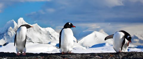 Day trip to Antarctica