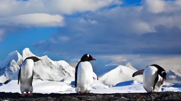 Antarctic Fly & Cruise Safari