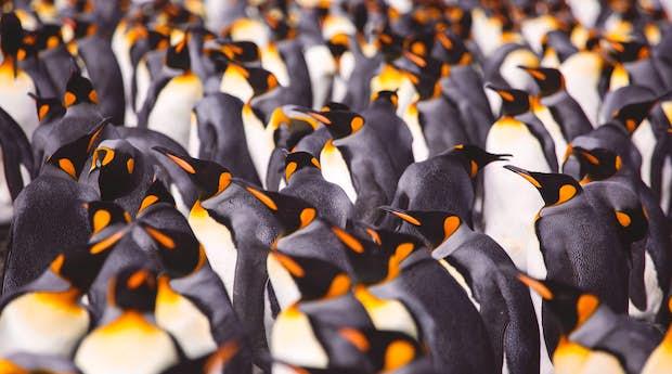 Luxury Falklands, South Georgia & Antarctica